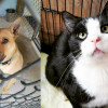 SHELTER SUNDAY: Meet Chopper (German shepherd mix) and Eddie (tuxedo kitten)