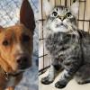SHELTER SUNDAY: Meet Ginger (whippet mix) and Arthur (domestic medium hair cat)
