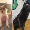 SHELTER SUNDAY: Meet Skylar (Jack Russell terrier mix) and Frankie (black cat)