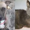 SHELTER SUNDAY: Meet Athena (mountain cur mix) and Marty (gray shorthair cat)