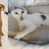 SHELTER SUNDAY: Meet Emma (Puerto Rican sato) and Evelyn (white tabby cat)