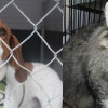 SHELTER SUNDAY: Meet Pete (coonhound) and Arthur (Maine Coon mix)