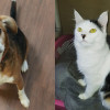 SHELTER SUNDAY: Meet Eli (beagle mix) and Riesling (calico cat)