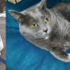 SHELTER SUNDAY: Meet Colt (hound mix) and Sheba (British shorthair tabby)