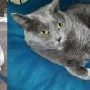 SHELTER SUNDAY: Meet Colt (hound mix) and Sheba (British shorthair tabby)