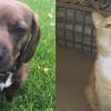 SHELTER SUNDAY: Meet Gracie (basset hound mix) and Dennis (orange tabby cat)