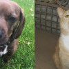 SHELTER SUNDAY: Meet Gracie (basset hound mix) and Dennis (orange tabby cat)