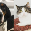 SHELTER SUNDAY: Meet Bo (coonhound) and Carmella (tabby cat)