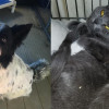 SHELTER SUNDAY: Meet Storm (collie mix) and Gia and Gemma (bonded gray cats)
