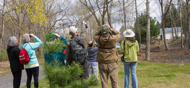 Take a guided bird walk down the Lackawanna River Heritage Trail
