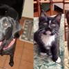 SHELTER SUNDAY: Meet Maxine (black Labrador) and Maggie and Morgan (tuxedo cats)