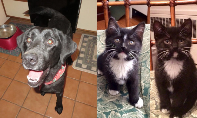 SHELTER SUNDAY: Meet Maxine (black Labrador) and Maggie and Morgan (tuxedo cats)