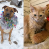 SHELTER SUNDAY: Meet Aries (Rhodesian ridgeback mix) and Blondie (long-haired cat)