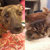 SHELTER SUNDAY: Meet Maddie (pit bull mix) and Holly (Maine Coon mix)