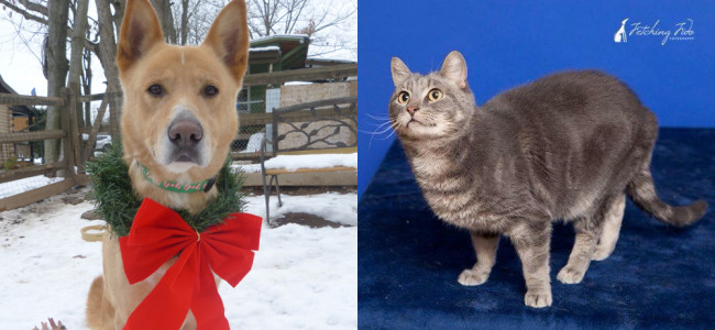 SHELTER SUNDAY: Meet Shea (German shepherd mix) and Gandolph (gray cat)