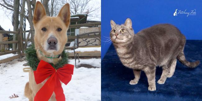 SHELTER SUNDAY: Meet Shea (German shepherd mix) and Gandolph (gray cat)