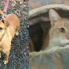 SHELTER SUNDAY: Meet Cypress (pit bull mix) and Anna (calico cat)