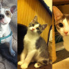 SHELTER SUNDAY: Meet Hund (pit bull mix) and Jinxy and Katie (white and gray cats)
