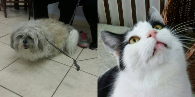 SHELTER SUNDAY: Meet Charlie (Lhasa Apso) and Louise (bicolor cat)