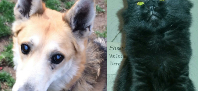 SHELTER SUNDAY: Meet Mya (German shepherd mix) and Winnie (long-haired cat)