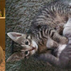 SHELTER SUNDAY: Meet Jonah (Treeing Walker Coonhound) and Stealth and Ricochet (tabby kittens)