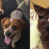 SHELTER SUNDAY: Meet Sugar and Spice (Jack-A-Bees) and Tiffany (black kitten)