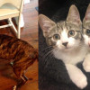 SHELTER SUNDAY: Meet Missy (pit bull terrier/Lab mix) and Allie and Annie (tabby kittens)