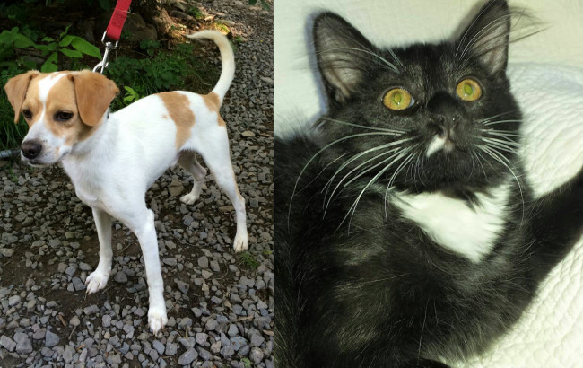 SHELTER SUNDAY: Meet Bagel (Jack Russell terrier) and Little White Paws (tuxedo kitten)