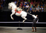 Gala of the Royal Horses back by popular demand at Mohegan Sun Arena in Wilkes-Barre on Sept. 12