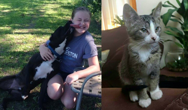 SHELTER SUNDAY: Meet Maddox (Lab/terrier mix) and Ginger (tabby kitten)