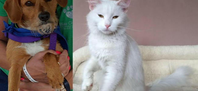 SHELTER SUNDAY: Meet Sparky (Jack Russell terrier) and Wynter (white cat)