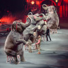 Ringling Bros. and Barnum & Bailey present 'Circus XTREME' at Mohegan Sun Arena in Wilkes-Barre April 28-May 1