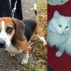 SHELTER SUNDAY: Meet Bobo (beagle mix) and Andy (white cat)