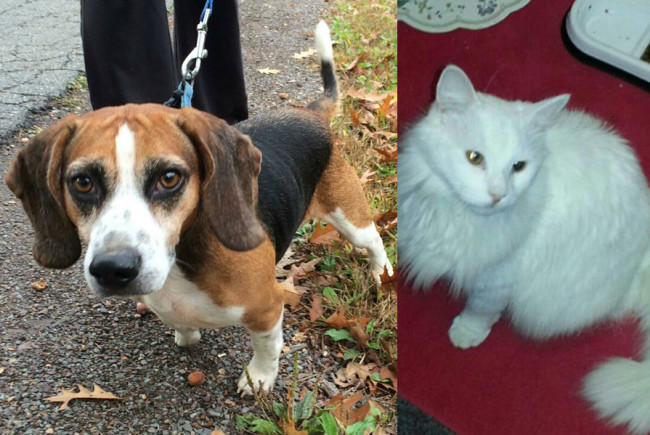 SHELTER SUNDAY: Meet Bobo (beagle mix) and Andy (white cat)