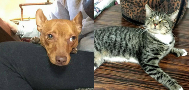 SHELTER SUNDAY: Meet Guinness (Chihuahua/dachshund mix) and Harry (tabby cat)