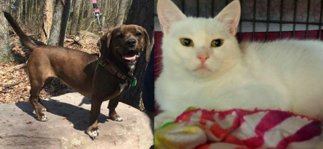 SHELTER SUNDAY: Meet Gracie (basset hound mix) and Aurora (white cat)