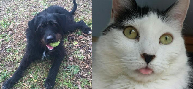 SHELTER SUNDAY: Meet China (Lab/Schnauzer mix) and Cookie (bicolor cat)