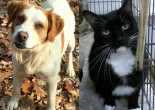 SHELTER SUNDAY: Meet Boo-Boo (Brittany spaniel mix) and Mouse (bicolor cat)