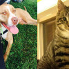 SHELTER SUNDAY: Meet Calvin (pit bull mix) and Pip (striped tabby kitten)