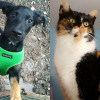 SHELTER SUNDAY: Meet Dorothy (German shepherd mix) and Carly (calico cat)