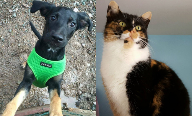 SHELTER SUNDAY: Meet Dorothy (German shepherd mix) and Carly (calico cat)
