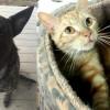 SHELTER SUNDAY: Meet Kodey (shepherd mix) and Millie (tabby cat)