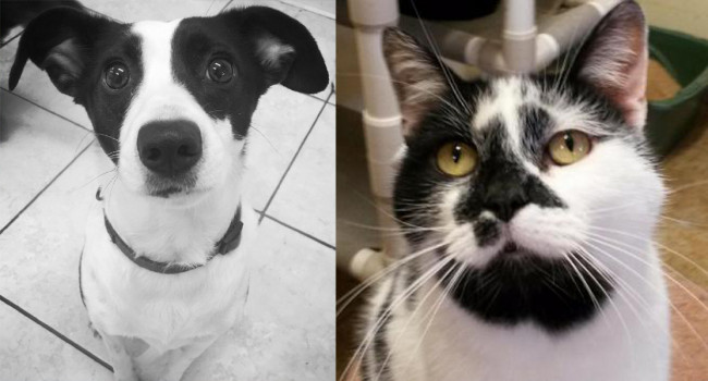 SHELTER SUNDAY: Meet Winston (Dalmatian/Jack Russell terrier mix) and Panda (bicolor cat)