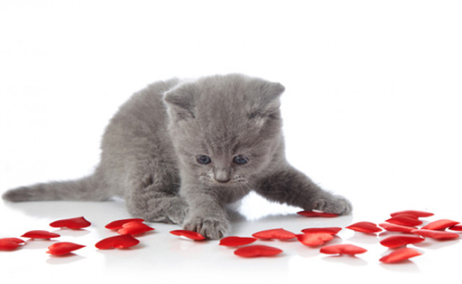 Valentines for Felines collects donations through Feb. 16 to care for cats at Indraloka Animal Sanctuary