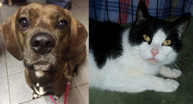 SHELTER SUNDAY: Meet Gracie (basset hound mix) and Trinity (bicolor cat)