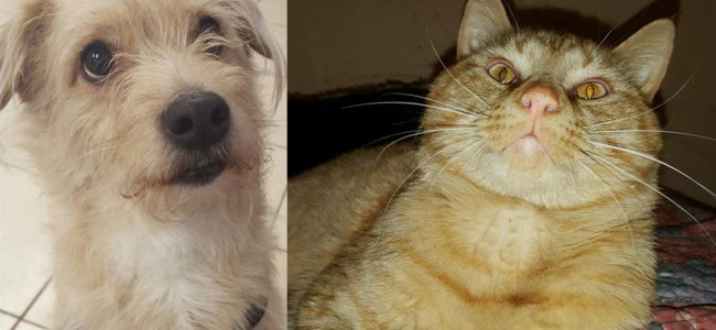 SHELTER SUNDAY: Meet Scrappy (dachshund/terrier mix) and Shane (orange tabby cat)