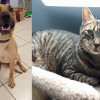 SHELTER SUNDAY: Meet Diogi (Black Mouth Cur) and Donald (tabby cat)