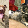 SHELTER SUNDAY: Meet Diesel (pit bull mix) and Olivia (tortoiseshell cat)