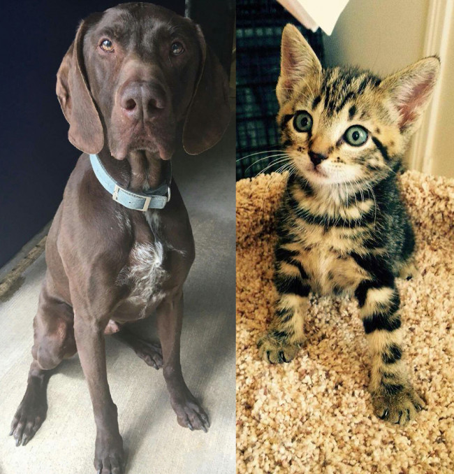 SHELTER SUNDAY: Meet Fritz (German shorthaired pointer) and Cypress (striped tabby kitten)