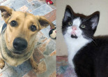 SHELTER SUNDAY: Meet Lady (German shepherd/Lab mix) and Gemma (tuxedo kitten)
